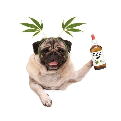 Best & Safest CBD Oils for Pets